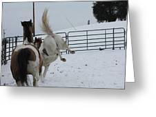 Horse 13 Greeting Card