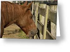 Horse 31 Greeting Card