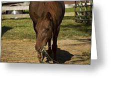Horse 32 Greeting Card