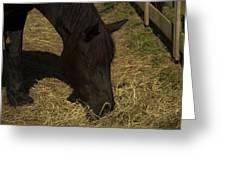 Horse 34 Greeting Card
