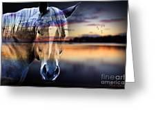Horse 6 Greeting Card by Mark Ashkenazi