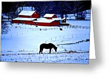 Horse Alone Greeting Card