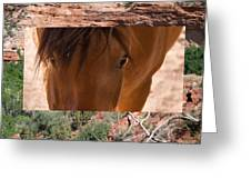 Horse And Canyon Greeting Card