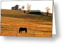 Horse And Farm By Jan Marvin Greeting Card