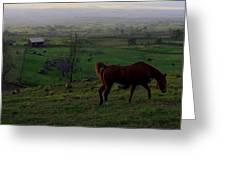 Horse And Farmhouse Greeting Card