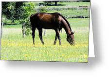 Horse And Flowers Greeting Card
