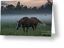 Horse And Fog Greeting Card