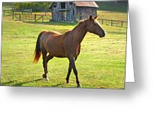 Horse And Old Barn In Etowah Greeting Card