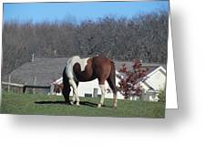 Horse And Shadow Greeting Card