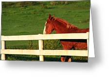 Horse And White Fence Greeting Card