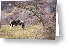 Horse And Winter Berries Greeting Card