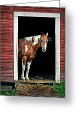 Horse - Barn Door Greeting Card