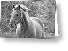 Horse Black And White Greeting Card