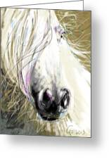 Horse Blowing In The Wind Greeting Card
