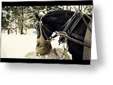 Horse Cinema Style Greeting Card