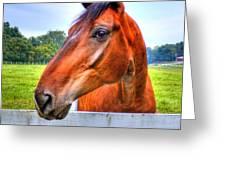 Horse Closeup Greeting Card