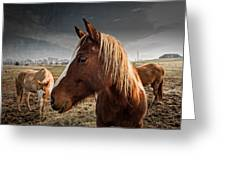 Horse Composition Greeting Card