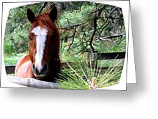 Horse Country Greeting Card