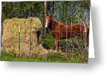 Horse Eating Hay In Eastern Texas Greeting Card