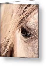 Horses Soul Greeting Card