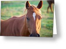 Horse Face Greeting Card