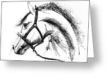 Horse Face Ink Sketch Drawing Greeting Card