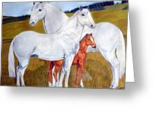 Horse Family Greeting Card