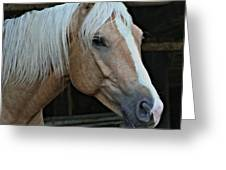 Horse Feathers Greeting Card