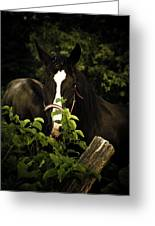 Horse Fence Greeting Card