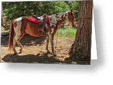 Horse For Rent South Lake Tahoe Greeting Card