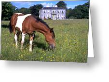Horse Grazes Near St. Clerans Greeting Card