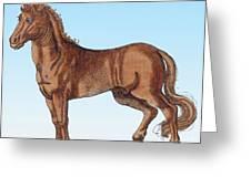 Horse Historiae Animalium  Greeting Card