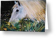Horse Ign Greeting Card