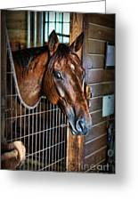 Horse In A Box Stall II - Horse Stable Greeting Card by Lee Dos Santos