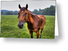 Horse In A Field Greeting Card
