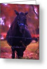 Horse In Autumn Light Greeting Card