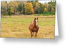 Horse In Field-fall Greeting Card