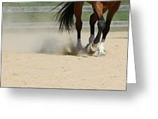 Horse In Motion Greeting Card