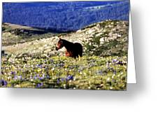 Horse In Mountain Wildflowers Greeting Card by Rebecca Adams