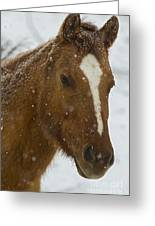 Horse In Snow   #4651 Greeting Card