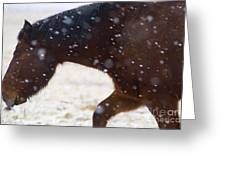 Horse In Snow   #5425 Greeting Card