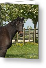 Horse In Spring Greeting Card