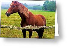 Horse In The Pasture Greeting Card