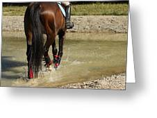 Horse In Water Greeting Card