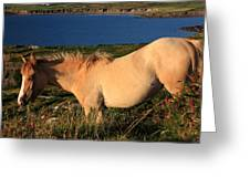 Horse In Wildflower Landscape Greeting Card