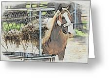 Horse N Hay Greeting Card
