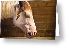 Horse Nap Greeting Card