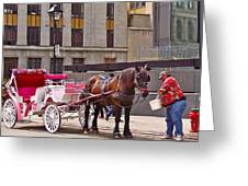 Horse Needs Water In Old Montreal-quebec-canada Greeting Card