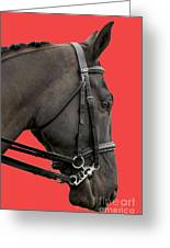 Horse On Red Greeting Card