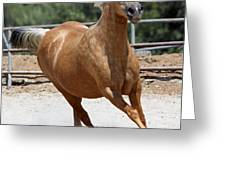 Horse On The Run Greeting Card